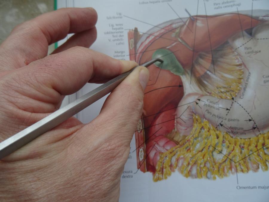 Aurachirurgie